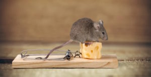Reliable Pest Control in Wrens Nest - Get a Quote