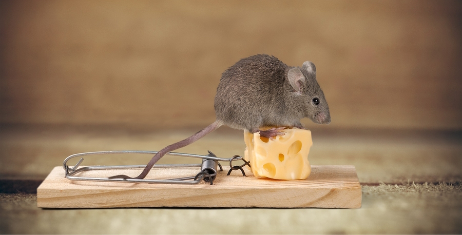 Mouse trap for pest removal