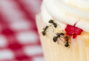 pest control to get rid of ants